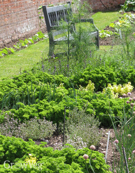 Herbs like free-draining soil