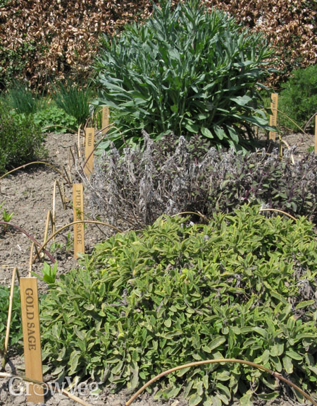 Planning A New Herb Garden Part 1
