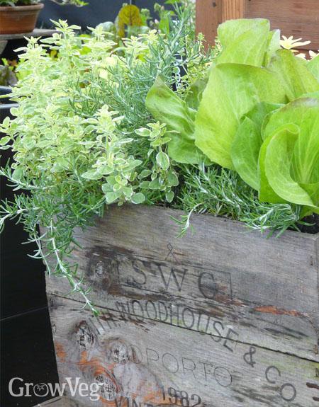 Homemade herb planter