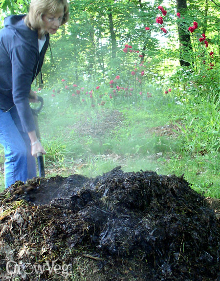 howmuch manure to use in vegetable garden
