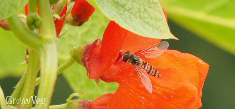 """Hoverfly"