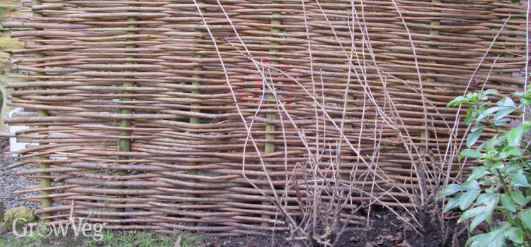 A hazel hurdle fence