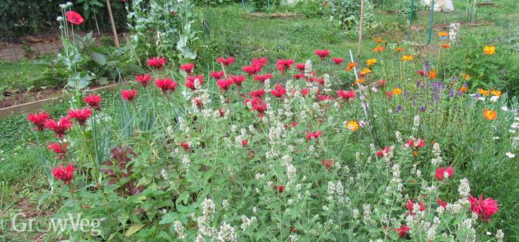 https://s3.eu-west-2.amazonaws.com/growinginteractive/blog/improve-pollination-flowers-2x.jpg