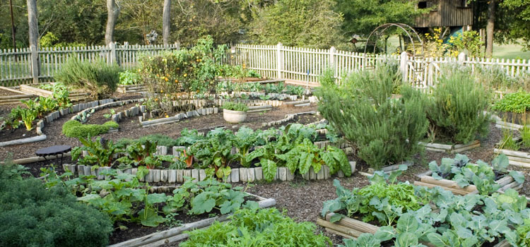 A well-planned potager garden