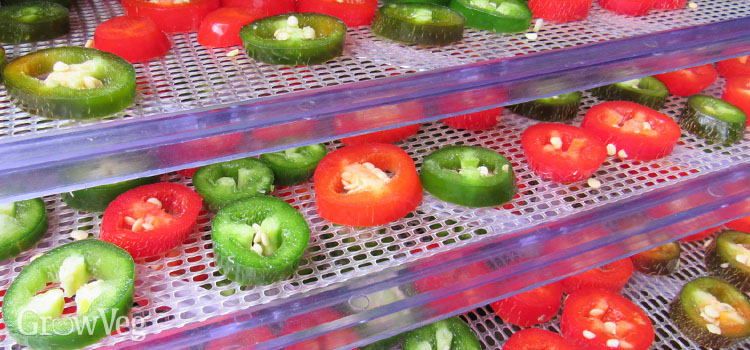 Chilies on food dehydrator trays