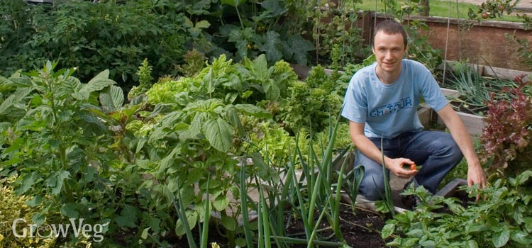 A well planned garden maximises your harvest