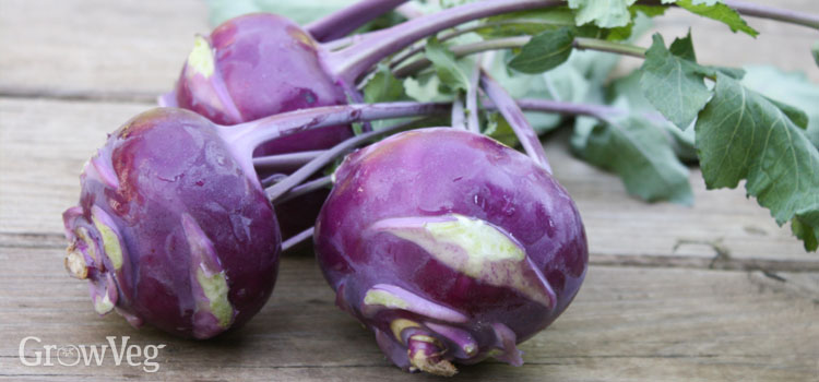 Kohlrabi Recipes For Gardeners