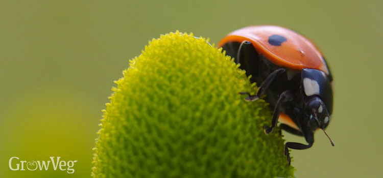 https://s3.eu-west-2.amazonaws.com/growinginteractive/blog/ladybird-2x.jpg