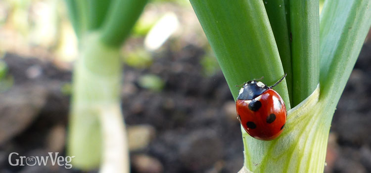 https://s3.eu-west-2.amazonaws.com/growinginteractive/blog/ladybug-garden-ladybird-2x.jpg