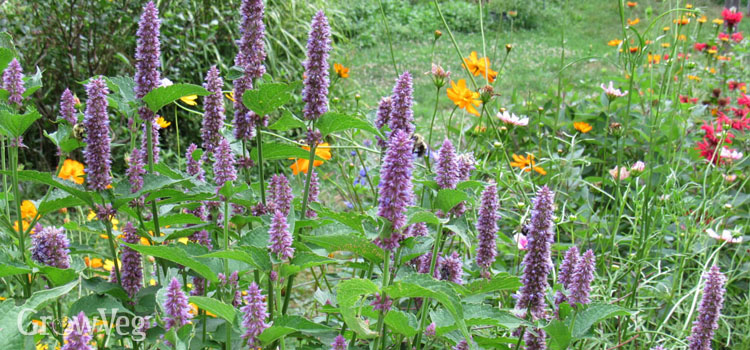 https://s3.eu-west-2.amazonaws.com/growinginteractive/blog/lamiaceae-agastache-2x.jpg