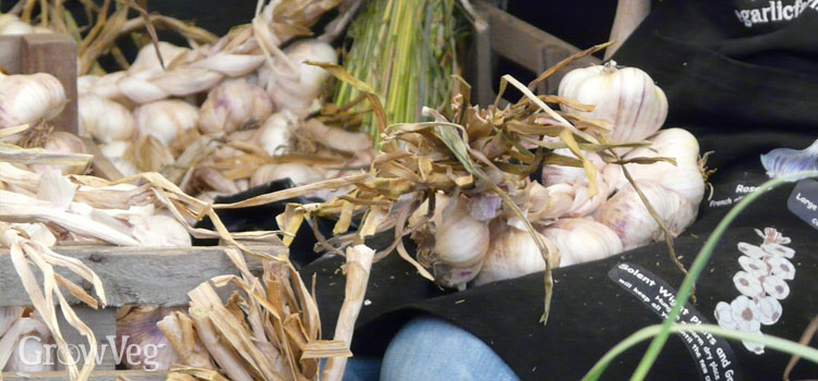 https://s3.eu-west-2.amazonaws.com/growinginteractive/blog/large-garlic-cloves-2x.jpg