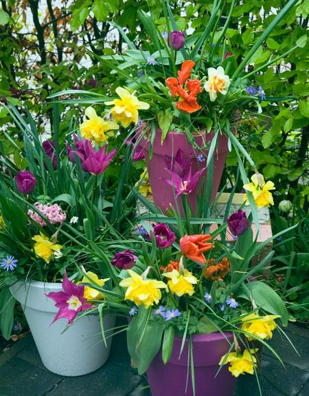 """""""Spring"""