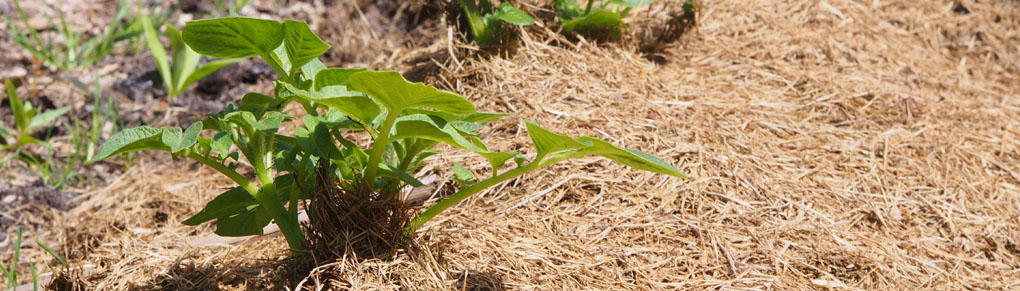 4 Clever Ways to Save Water in the Vegetable Garden
