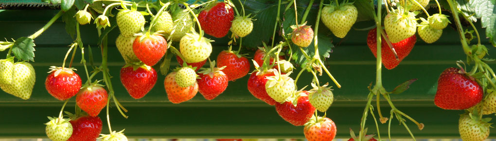 5 Best Crops for Your Edible Container Garden