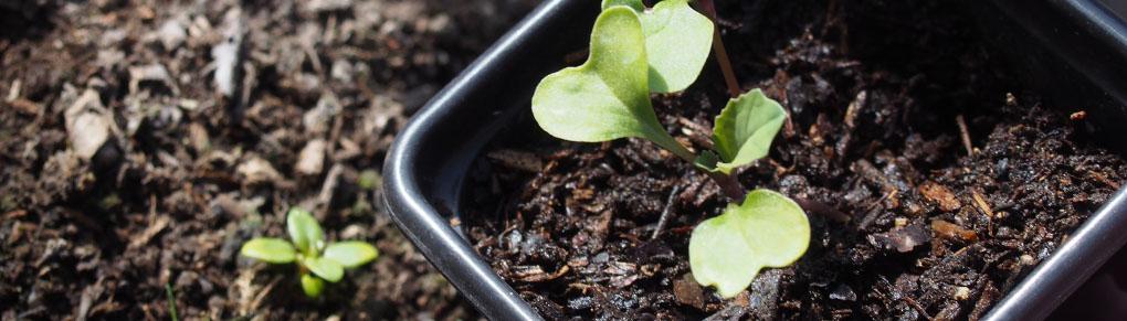 6 Ways to Tell Seedlings from Weedlings