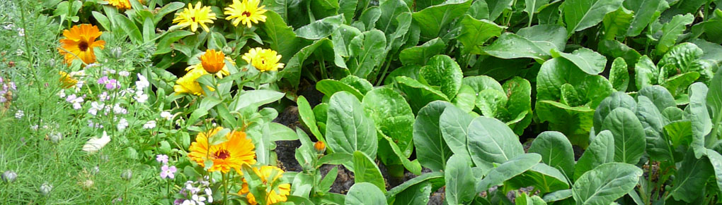 Confuse Pests with Companion Planting