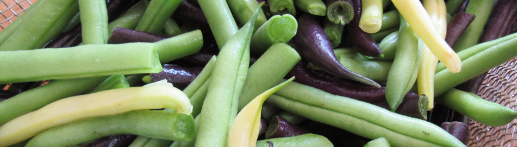 Grow Your Own Gourmet Green Beans
