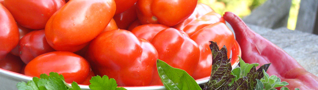 In Search of the World's Best Tomatoes