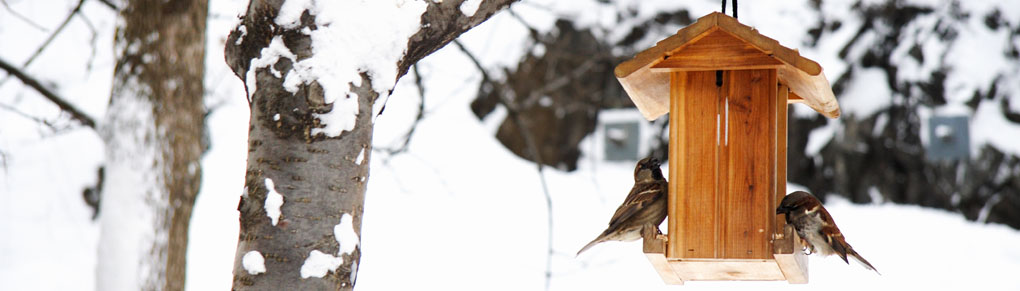 Top 10 Tips for Feeding Winter Birds
