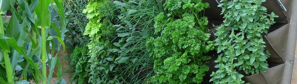 Vertical Gardening - Grow More in Your Garden!