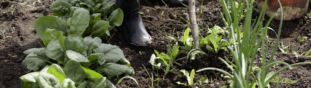 Win the War on Weeds!