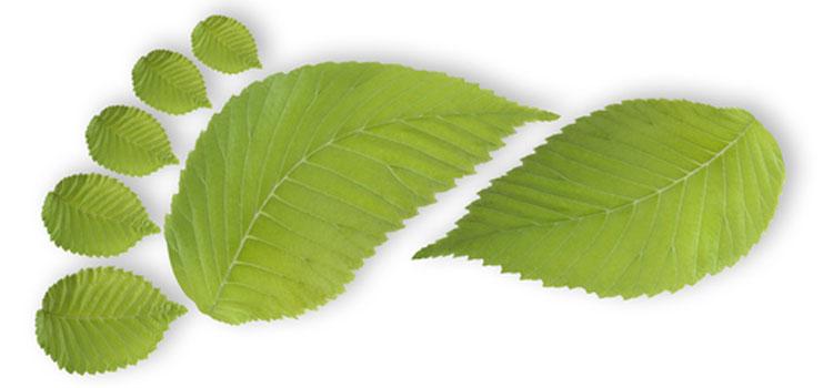 https://s3.eu-west-2.amazonaws.com/growinginteractive/blog/leaf-footprint-2x.jpg