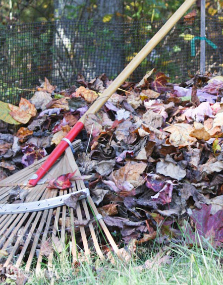 Raking leaves for leafmould