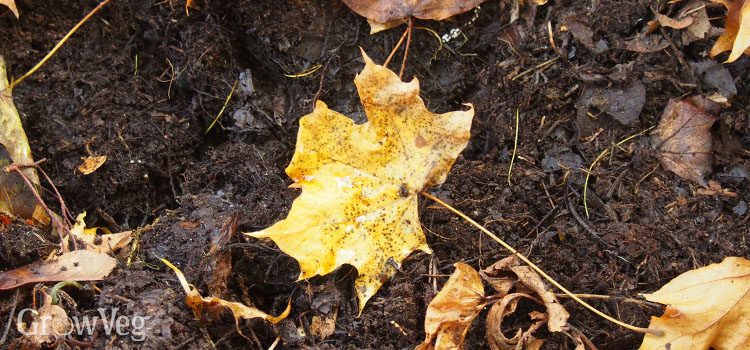 Leaves rotting down into leafmould