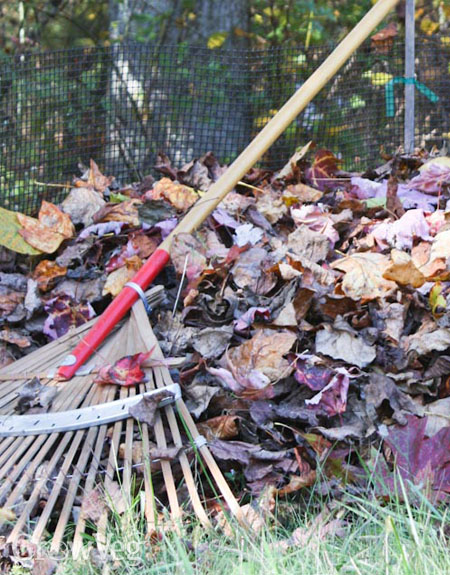Raking fallen leaves for leafmould