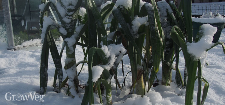 https://s3.eu-west-2.amazonaws.com/growinginteractive/blog/leeks-in-snow-2x.jpg
