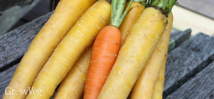 https://s3.eu-west-2.amazonaws.com/growinginteractive/blog/luck-with-carrots-yellow-2x.jpg