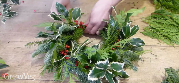 Making a Christmas wreath