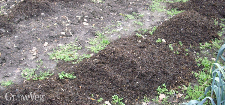 Adding compost to a vegetable bed