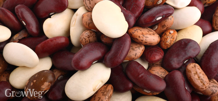 https://s3.eu-west-2.amazonaws.com/growinginteractive/blog/mixed-dry-beans-2x.jpg