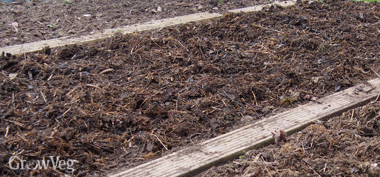 A thickly mulched bed