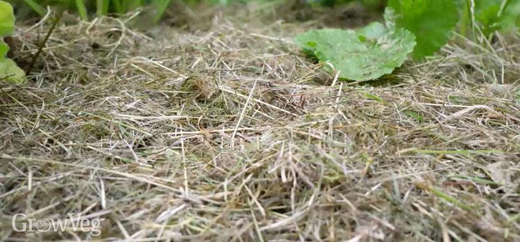 """""""Grass"""