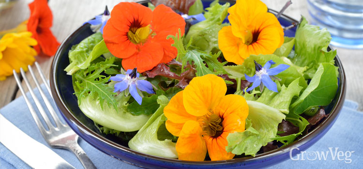 Nasturtium flowers in a salad