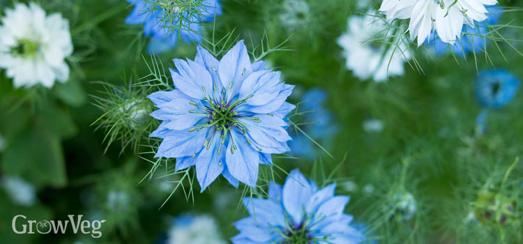 10 Quick Blooming Flowers to Grow from Seed
