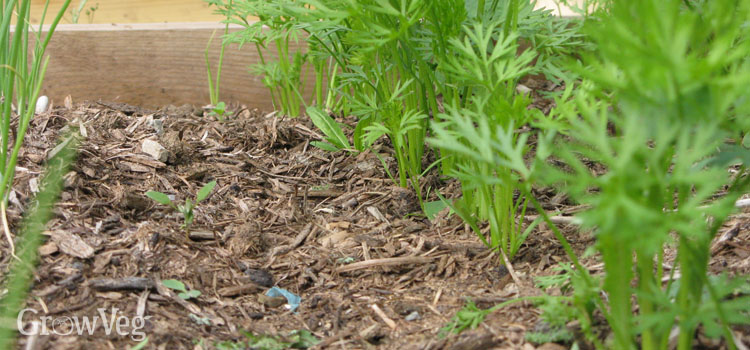 Mulched no-dig bed