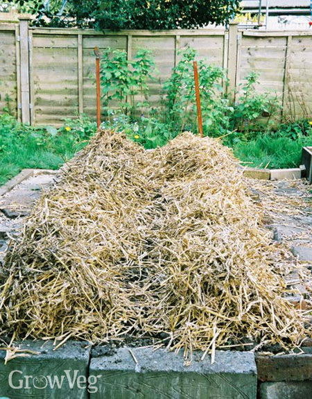 No dig potato beds mulched with straw