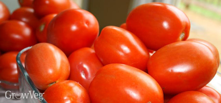 Paste tomatoes for canning