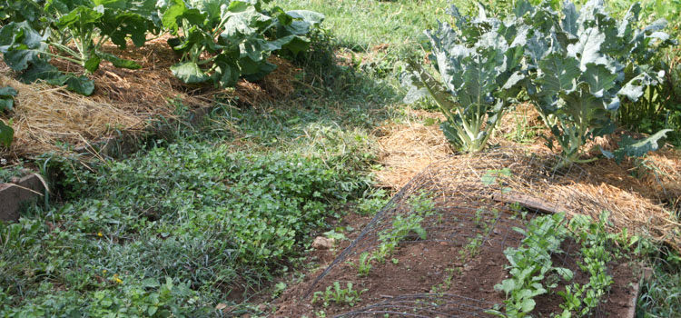 Green pathways are hard to keep free of weeds