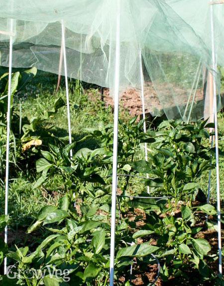 Using netting or cloth to shade plants