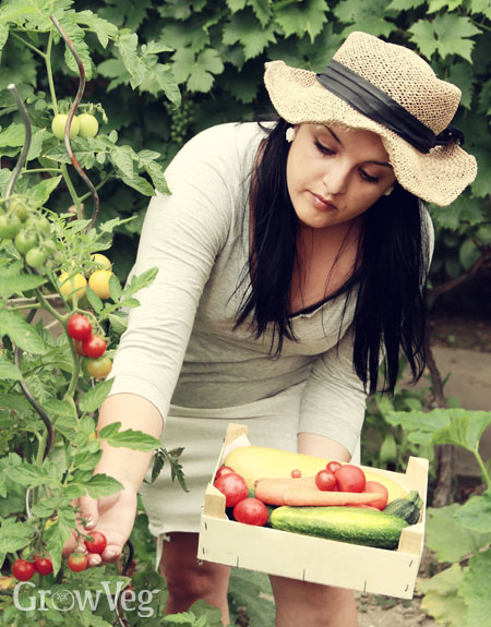 """Harvesting"