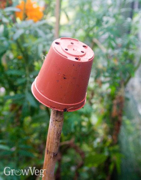 Upturned pot on cane