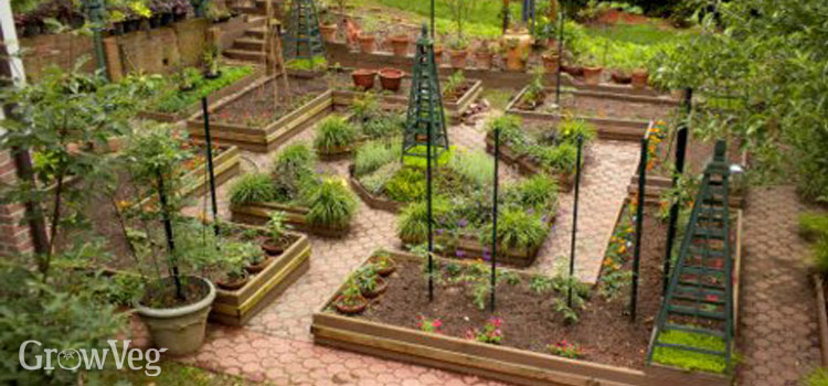 A potager garden with flowers and vegetables combined