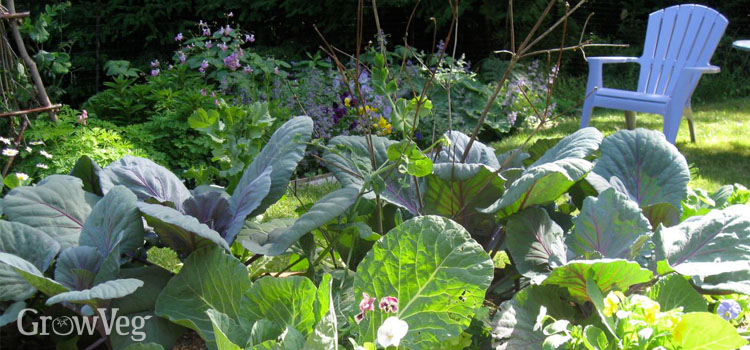 Cabbages and flowers