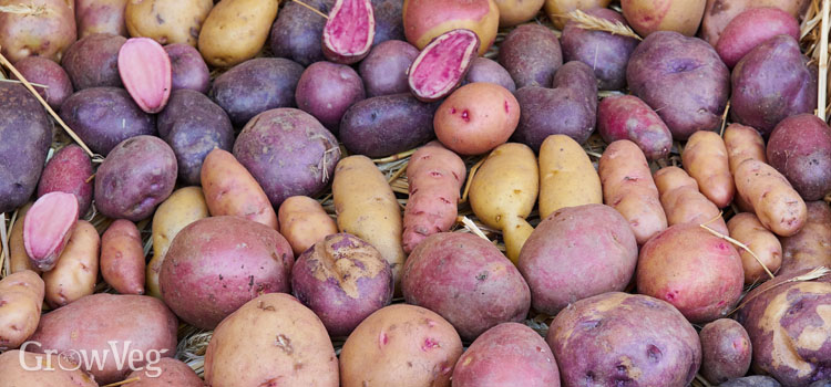 https://s3.eu-west-2.amazonaws.com/growinginteractive/blog/potato-varieties-2x.jpg