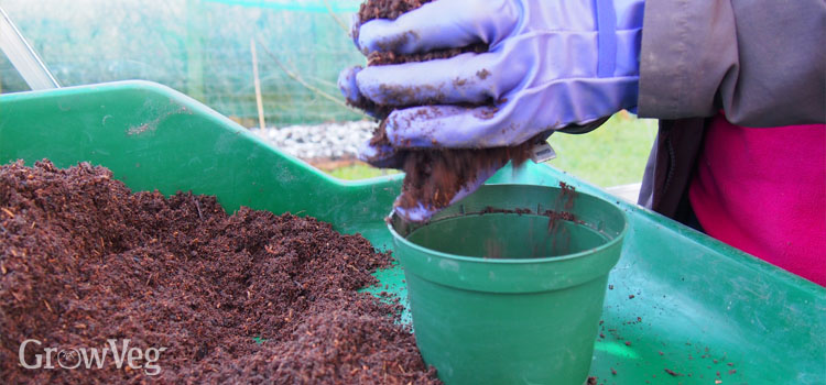 Potting up with homemade potting mix