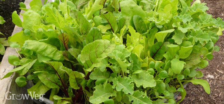"""Salad"